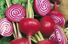Ätbara nyheter i fröhyllan