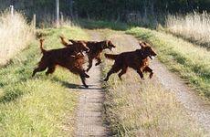 Djurförsäkring: Dyrt att vara utan