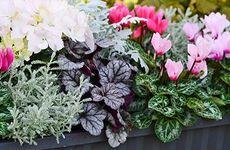 Här är växterna som du kan plantera på hösten