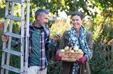 Stort test av äppelcider och must