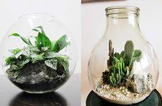 Så planterar du i ett växtterrarium